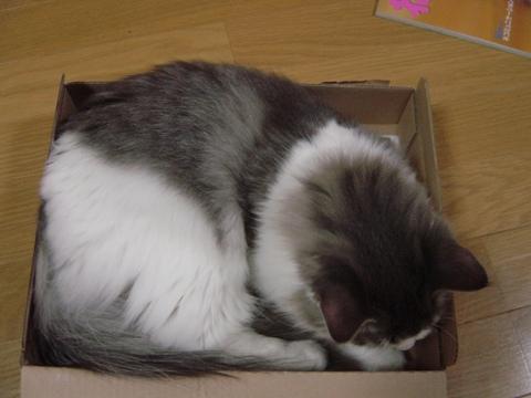 箱フレ01(2009.07.24)