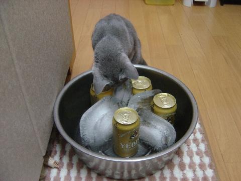 ニコとビール02(2009.07.26)