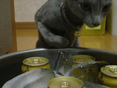ニコとビール04(2009.07.26)