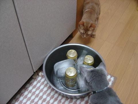 ニコジョゼとビール(2009.07.26)