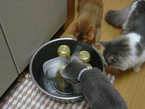 みんにゃとビール01(2009.07.26)