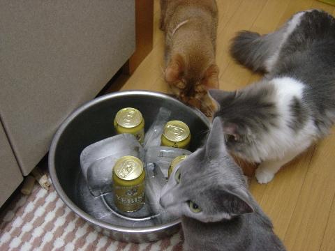 みんにゃとビール02(2009.07.26)