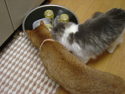 ジョゼフレとビール(2009.07.26)
