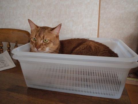 箱ジョゼ04(2009.08.01)