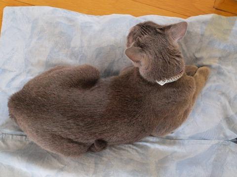 冷え冷えニコ02(2009.08.07)