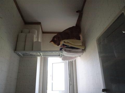 トイレで遊ぶ01(2009.08.16)