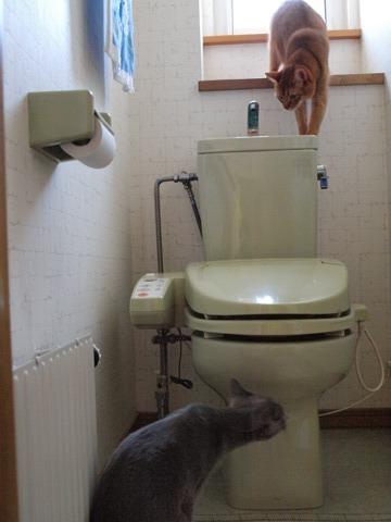 トイレで遊ぶ02(2009.08.16)