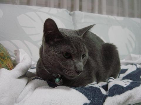 1歳のアレくん(2010.09.21)