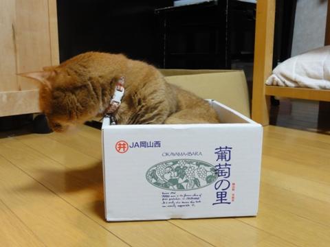ハコスキー狂想曲03(2011.09.24)