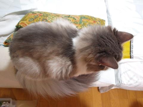 べこ餅02(2011.09.26)