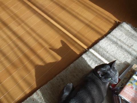 秋の猫神様(2011.09.28)