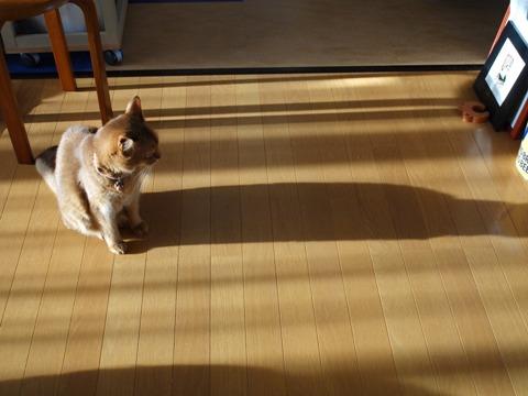 冬のきざし02(2011.10.12)