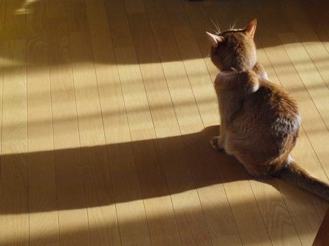 冬のきざし03(2011.10.12)