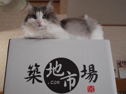 通販三昧01(2011.10.22)