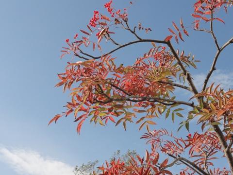 秋の風景01(2011.10.28)
