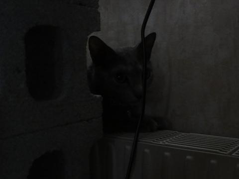 寒がりひよひよ01(2011.10.28)