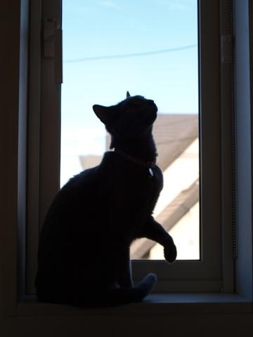 窓クラブの宣伝(2011.10.31)