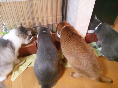 みんにゃでお食事01(2011.10.31)