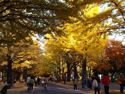 銀杏並木04(2011.11.03)