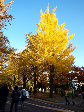 銀杏並木07(2011.11.03)