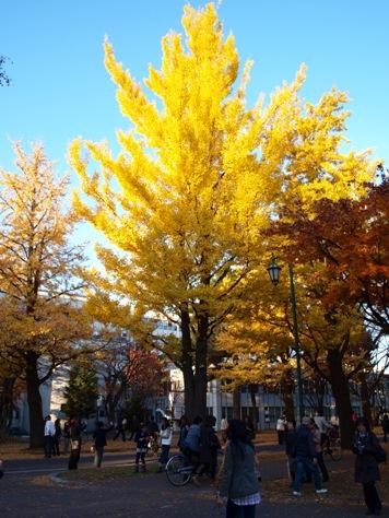 銀杏並木08(2011.11.03)