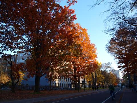 メインストリートの秋(2011.11.03)