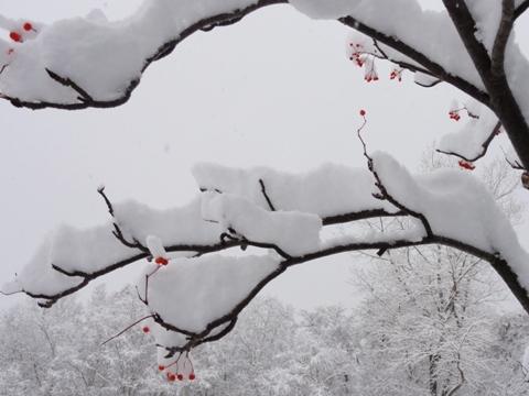 雪っ!(2011.11.17)