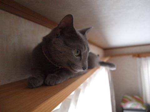 華麗なる退場03(2011.12.04)