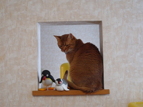 のぞき窓にて05(2011.12.14)