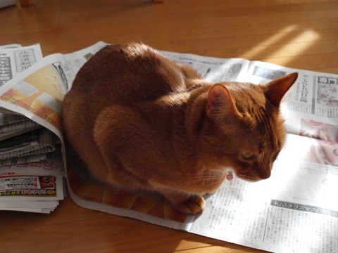 冬の猫神様03(2011.12.17)