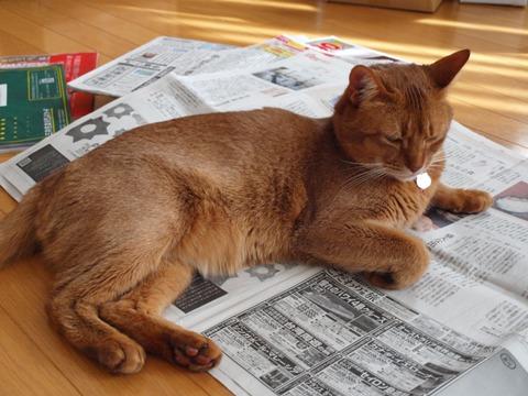冬の猫神様04(2011.12.17)