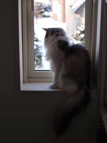除雪見物02(2011.12.18)