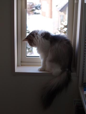 除雪見物03(2011.12.18)