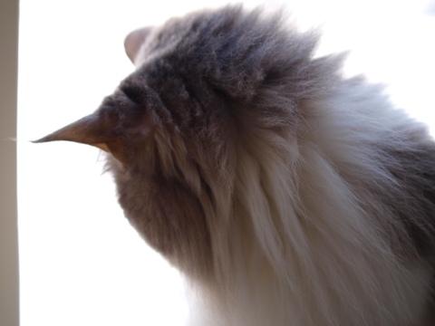 除雪見物05(2011.12.18)