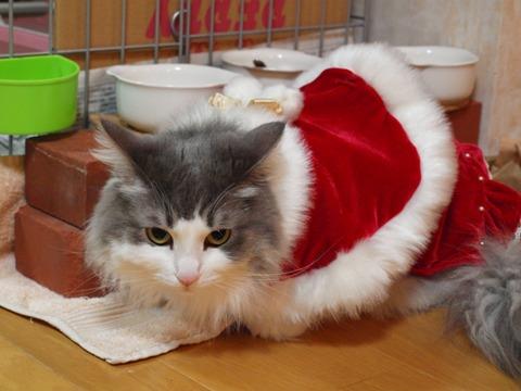 クリスマスのコスプレ01(2011.12.18)