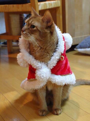 クリスマスのコスプレ02(2011.12.18)