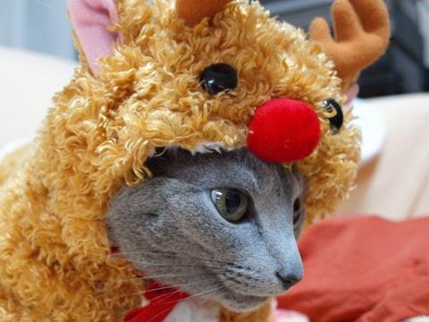 クリスマスのコスプレ03(2011.12.18)