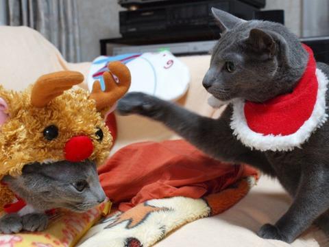 クリスマスのコスプレ05(2011.12.18)