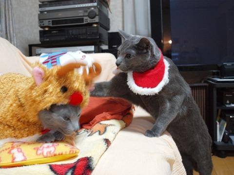 クリスマスのコスプレ06(2011.12.18)