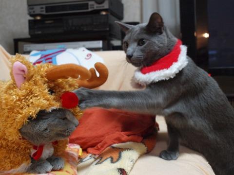 クリスマスのコスプレ07(2011.12.18)