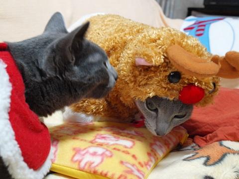 クリスマスのコスプレ08(2011.12.18)