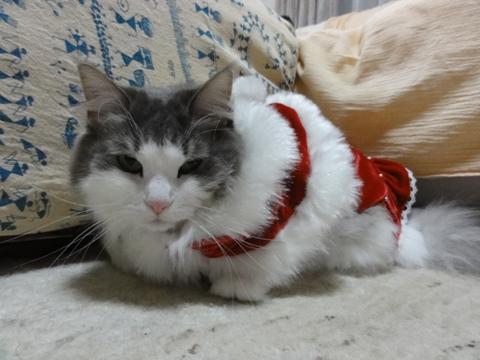 クリスマスのコスプレ10(2011.12.18)