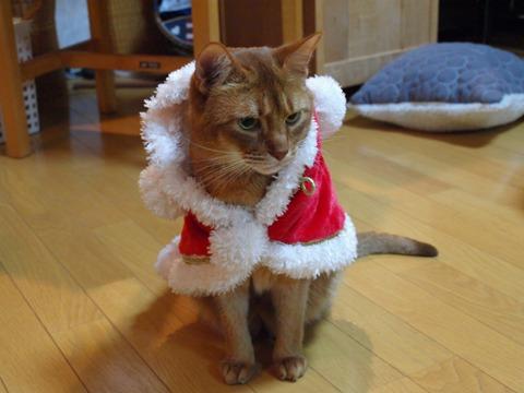 クリスマスのコスプレ13(2011.12.18)
