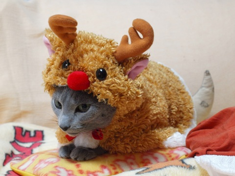 クリスマスのコスプレ14(2011.12.18)