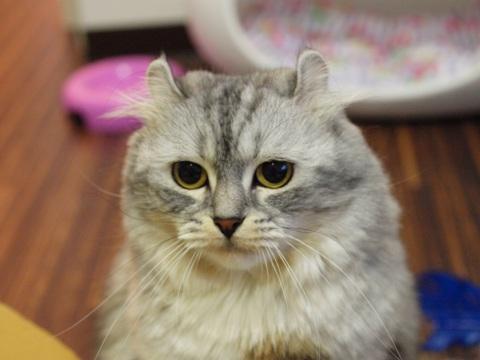 ミミさま(2011.12.26)