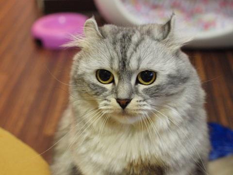 ミミさん(2011.12.26)