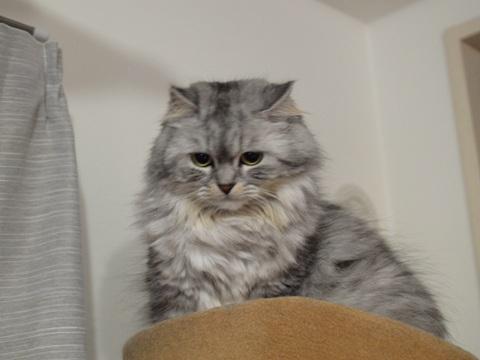 メルモさん(2011.12.26)
