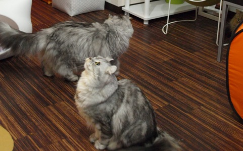 ミミさんとメルモさん(2011.12.26)