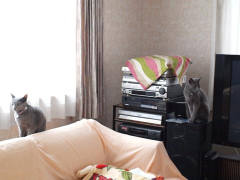 銀ブラ置物02(2011.12.27)