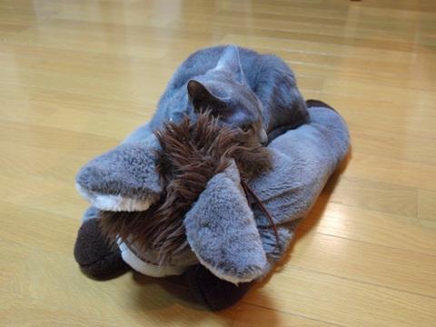 乗馬ちう02(2012.01.07)